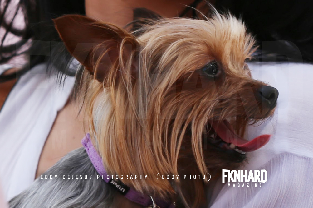 EddyDeJesus-Photography-Fknhard-Magazine-Sports-Illustrated-Swimsuit-puppy-appearance-dog-friendly-carry-yorkie